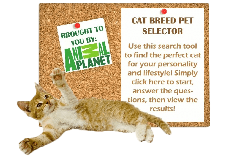 cat-breed-selector-2